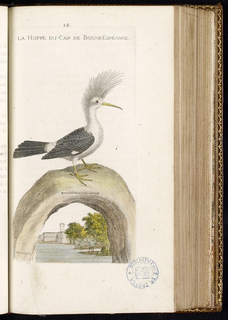 Histoire des oiseaux, peints dans tous leurs aspects apparens et sensibles, ornée de planches coloriées, par F.-N. Martinet, 1790, Médiathèque du Grand Troyes, photo P. Jacquinot, cote S 11 3028 15